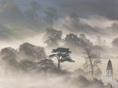 Trees in Early Morning Mist, Cotswolds, England Photographic Print by Peter Adams at Art.com