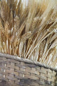Autumn Wheat
