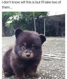 He looks like a little bear!!