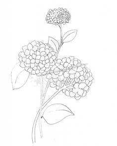 Hydrangea-Coloring-Page