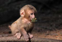 What is it about baby monkeys?  So adorable!