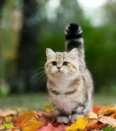 Autumn is a curious thing.