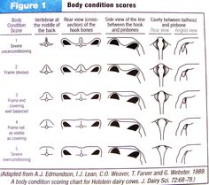 BodyConditionScoreChart Milk Cows. Also pictures of cows and their body conditions in different parts of their  lactation.