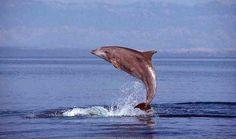 Where dolphin lovers go in Croatia
