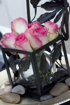 Rosen cream pink