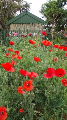 Poppies in the vegetable garden Planting Seeds, Planting Flowers, Sheds, Bird Houses, Vegetable Garden, Poppies, Gardens, Plants, Shed Houses