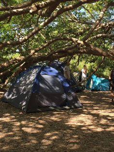 Camping Under the Fig Tree There is a camping ground that can accommodate up to 30 pax at the Kikuletwa hotspring where campers can install their tents for night. The area has basic facilities Fig Tree, Walking Tour, Hot Springs, Tents, Campers, Outdoor Gear, Tourism, Swimming, Culture