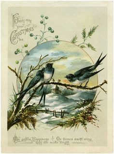 Antique Christmas Birds Image - So Charming! - The Graphics Fairy