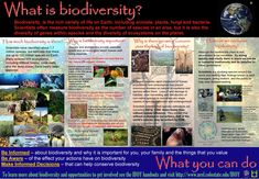 biology exploring the diversity of life study guide