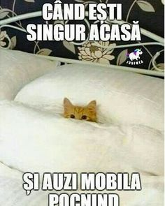 Haha def not sleeping on the floor but we can share Cute Cats And Kittens, I Love Cats, Cool Cats, Kittens Cutest, Cute Funny Animals, Cute Baby Animals, Funny Cats, Cats Humor, Funny Shit