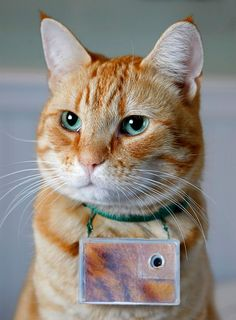 Most-Famous-Felines ~ Cooper is a 6 year old American Shorthair cat living in Seattle. Once a week he wears a lightweight digital camera fastened to his collar, which snaps a new photo every 2 minutes.
