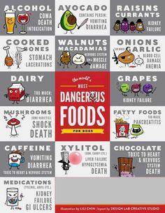 Dog Poison Chart