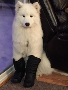 These boots are made for Koda