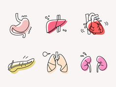 Our first set icons of the human body: the organs. Our talented illustrator came from medical school, so she was excited to do the anatomically correct icons for these organs. And do you know wha. Human Icon, Medical Icon, Illustrator, Best Icons, Body Organs, Stickers, Human Anatomy, Icon Set, Icon Design