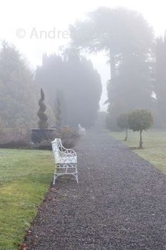 Gravel path, topiary, seating and mist covered trees in the formal gardens at Castle Durrow, County Laois, Ireland