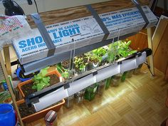 Indoor veggie garden. It can be done!!!