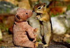 Chipmunk with a teddy bear
