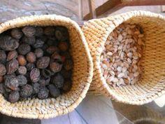 Los frutos del argán (Argania Spinosa) se recogen y se dejan secar, para extraer el hueso de donde se hace la extracción del aceite.