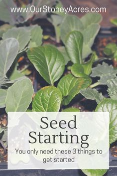 Seed Starting The basics of starting seedlings are pretty easy to grasp. Really all you need is a container, some soil, and a light! Organic Gardening, Gardening Tips, Gardening Books, Hydroponic Gardening, Growing Seedlings, Growing Plants, Growing Tomatoes In Containers, Backyard Vegetable Gardens, Garden Plants