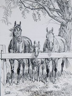 Waiting by Sam Savitt from Vickie and the Brown Mare. I always loved his books and art. Horse Drawings, Animal Drawings, Amazing Drawings, Cute Drawings, Farm Animal Coloring Pages, Horse Sketch, Scratchboard Art, Cowboy Art, Vintage Horse