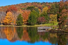 Bernheim Forest is where I live...I just open my backdoor and there is a Patchwork Quilt of Fall colors.    I love my Property!
