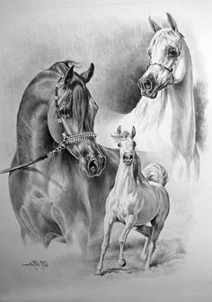 Sketches of Arabian horses Horse Drawings, Animal Drawings, Art Drawings, Drawing Art, Drawing Ideas, Arte Equina, Arabian Art, Arabian Horses, Horse Sketch