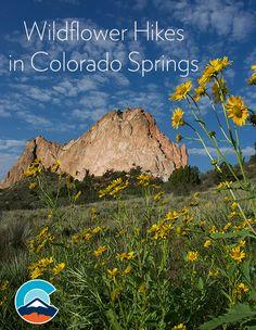 Wildflower Hikes near Colorado Springs, Colorado