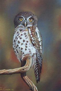 White spotted owl