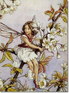 DaddyDan360: Fairy Garden Roots