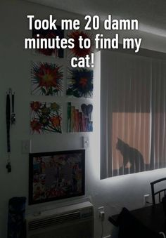 """""""Took me 20 damn minutes to find my cat!        """""""