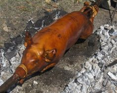 """Christmas Lechón al Horno (Suckling Piglet Roast) has become a Christmas tradition in Bolivia. Usually shortened to just """"Christmas Lechón"""", it is prepared in traditional fashion by roasting a suckling pig over an open fire on a rotisserie. ...."""