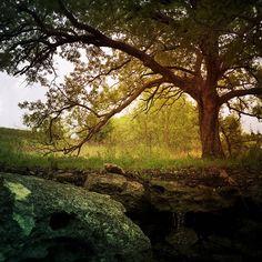 The Hidden Spring   by Wayne Greer
