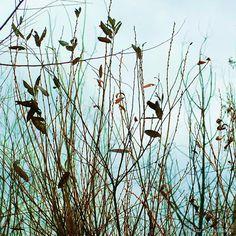 Hazy Day Fine Art Photograph 8 x 8 Aqua by brigettamargarietta, $35.00