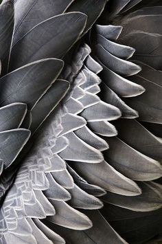 Grey, Nature, Designer Inspiration Board: Shades of Grey, Bar Napkin Productions, bnp-llc.com
