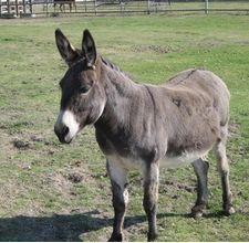 How to Make a Donkey Costume