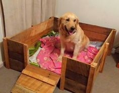 Whelping box for dogs