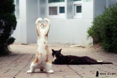 Cat Doing Ballet Click here to learn how to stop your cats from spraying in your house.