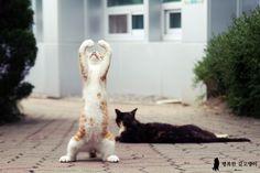 輪っ! ilovedotcat: theblindcat: Ballet!
