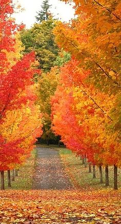 beautiful fall trees....