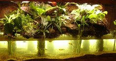 ANDY BAKER uploaded this image to 'VIVARIUM'.  See the album on Photobucket.