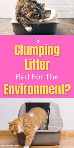 Is clumping cat litter safe to use and is it bad for the environment? Plus, can it really stop odor? Discover all about clumping litter and if it's right for you and your cat. Best Cat Litter, Litter Box, Surface Mining, Compost Bags, Wood Pellets, Bentonite Clay, Stronger Than You, Cat Life