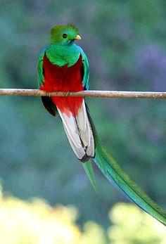 Perroquet du Costa Rica : au coeur de la faune sauvage et de ses oiseaux colorés