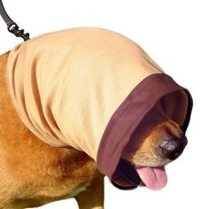 This removable hood can help dogs that are reactive to other dogs or people on their walks.