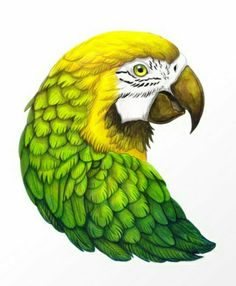 Green Macaw Art Print by sanjanabaijnath Bird Drawings, Art Drawings Sketches, Colorful Drawings, Animal Drawings, Parrot Drawing, Parrot Painting, Colored Pencil Artwork, Color Pencil Art, Animal Sketches