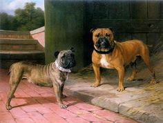 A Red Bulldog and Brindle Bulldog by a Barn, 1908, by Thomas Percy Earl (1874-1947)