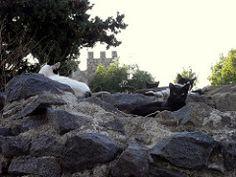Cats castle - Beja, Alentejo