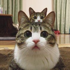 猫の上にぬこ