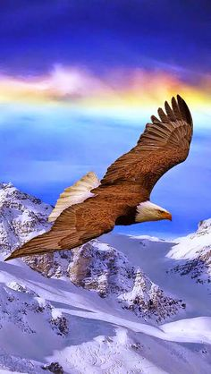 Majestic Soaring Eagle!! I'll be up close and personal with these guys real soon.