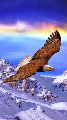 Majestic Soaring Eagle!!