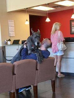 Just a regular checkup at the vet